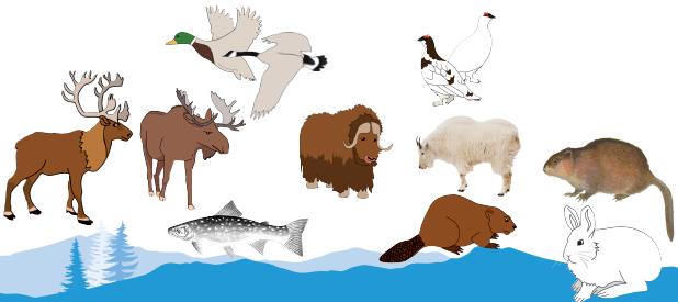 Environmental Contaminants Fact Sheets | Série de feuillets d'information sur les polluants environnementaux